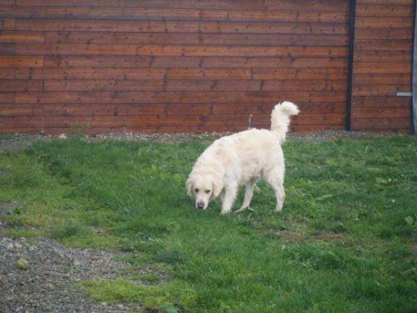 Pension pour chien Château-Gontier : Pension Canine le